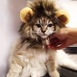 funny lion mane cat wig